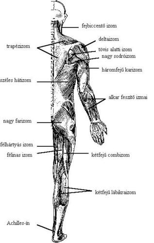 fájnak a csontok és az izmok