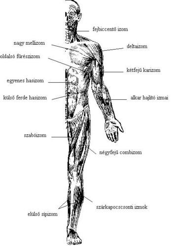 miért fájnak az ízületek és a csontok ízületi fájdalom és duzzanat gél